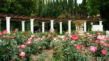 Rose Garden at Beverly Garden Park