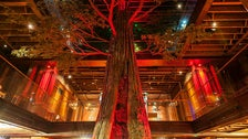 Redwood tree at Clifton's